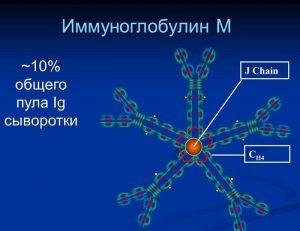 Иммуноглобулин М
