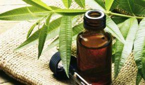 Эффективность масла чайного дерева