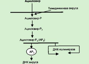 Механизм противовирусного действия Ацикловира