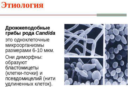 adgeziya-gribov-vo-vlagalishe