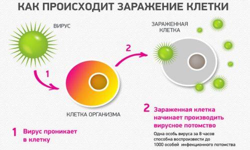Инфицирование клетки