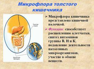 Микрофлора толстого кишечника