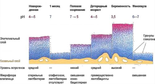 Микрофлора в зависимости от возраста