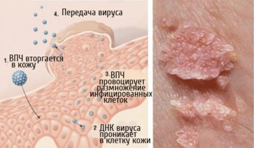 Передача и проникновение вируса