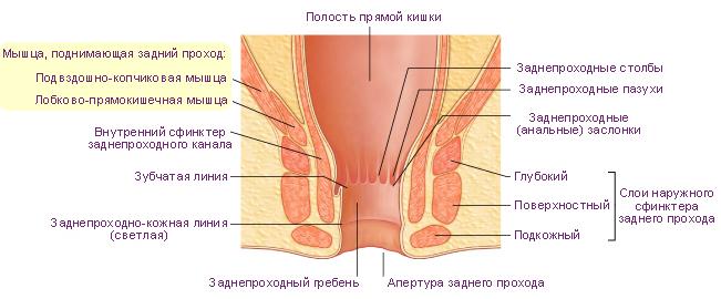 Зуд в заднем проходе у женщин причины появления лечение