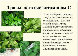 Травы с витамином С