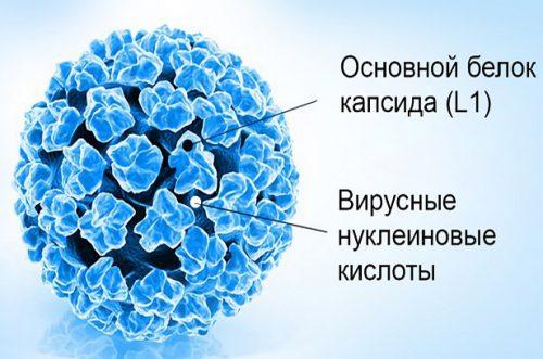 Вирус ВПЧ