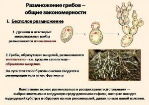 Закономерности размножения грибков