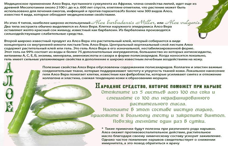 Алоэ от папиллом — эффективные способы применения