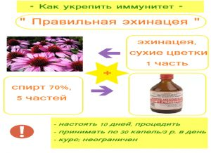 Рецепт настойки эхинацеи