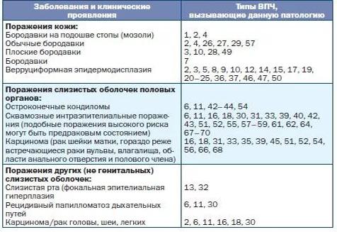 Впч 39 генотип количественный это - Jks-k.ru