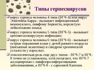 Типы герпесвирусов