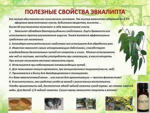 Полезные свойства эвкалипта
