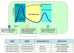 Схема диагностики TORCH-инфекции