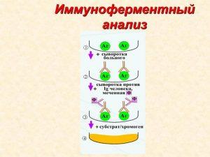 Схема иммуноферментного анализа