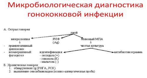 Диагностика гоноккоковой инфекции