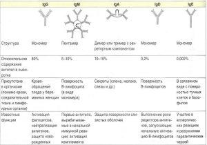 Функции антител