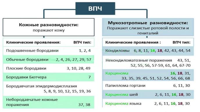 Что такое 52 тип впч - Jks-k.ru