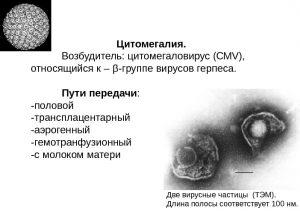 Возбудитель цитомегаловирус