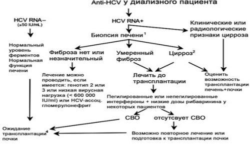 Алгоритм ведения anti-HCV позитивных пациентов