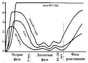 Фазы течения заболевания