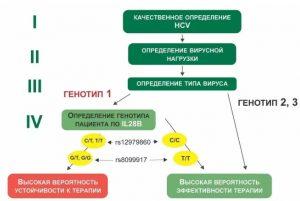 Генотипы вируса