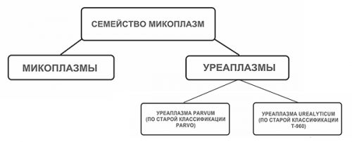 Классификация уреаплазм