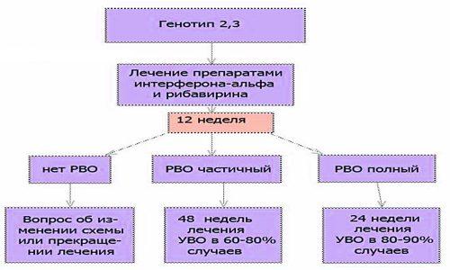Лечение 2 и 3 генотипов