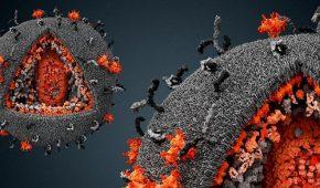 Опасность вируса папилломы