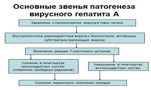 Основные звенья патогенеза
