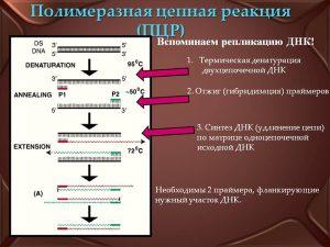 ПЦР-диагностика