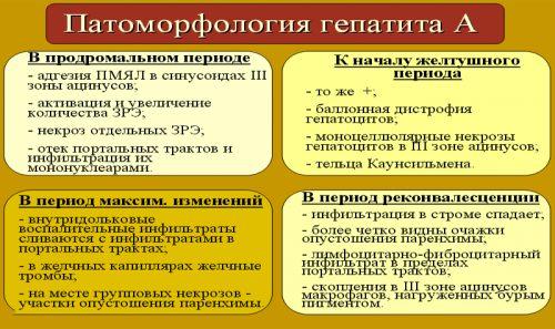 Патоморфология гепатита А