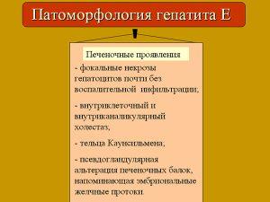 Патоморфология гепатита Е