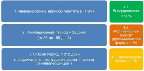 Прогноз развития гепатита B