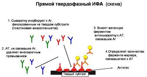 Проведение анализа ИФА