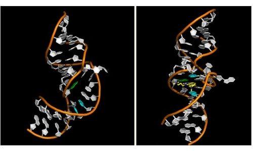 РНК вируса