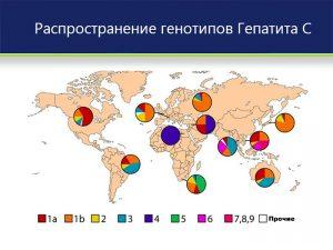 Распространенность генотипов вируса
