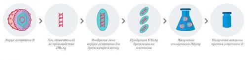 Схема производства рекомбинантной вакцины