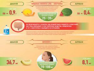 Сравнение дыни и арбуза