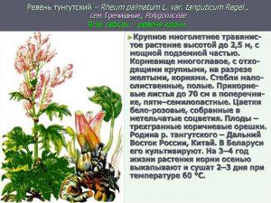 Свойства растения