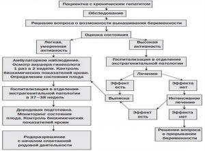 Ведение беременных при хроническом гепатите