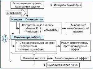 Выведение из организма Инозина