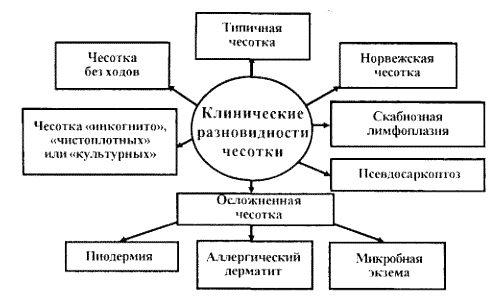 Клинические разновидности чесотки