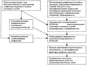 Патогенез хламидийной инфекции