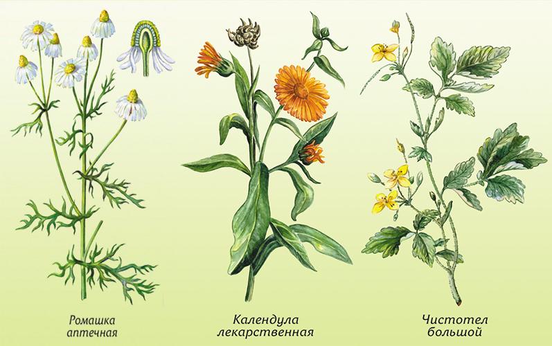 Катера, картинки лекарственные растения для детей