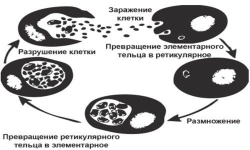 Схема развития инфекции
