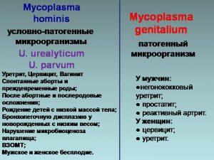 Типы микоплазм
