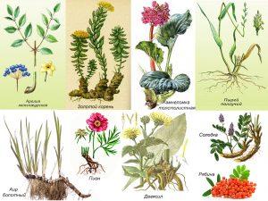 Травяной сбор от хламидий