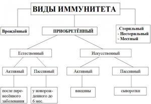 Виды иммунитета