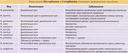 Виды микоплазмы и уреаплазмы